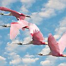 &quot;Power Of Pink&quot; - roseate spoonbills flying by John Hartung