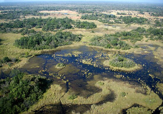 Aerial of Okavango Delta, Botswana (7) by Margaret  Hyde