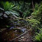 Rain Forrest creek by Andrew Wilson