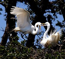 Egret Display - - Cards & iPad Cases by Maria A. Barnowl