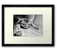 Sleeping @ Work Framed Print