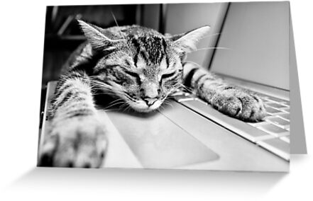 Sleeping @ Work by Richard Lam