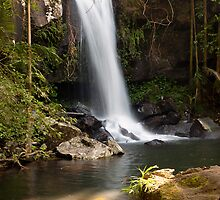 Curtis Falls, Mount Tamborine. by Peter Doré