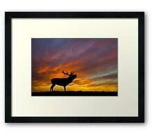 Roaring Stag at Sunset Framed Print