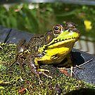 Ribbeting Image by sillyfrog