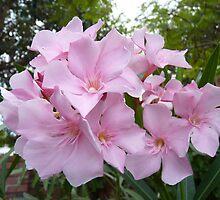Laurier-rose by simonescott