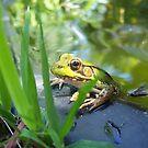 Sunny Spot by sillyfrog