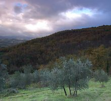 Olive Groves Greve in Chianti by Matt Bishop