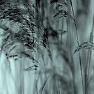 Whispering Reeds  by JUSTART