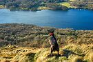 Dog Day Afternoon - Gummers How Views by VoluntaryRanger