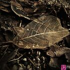 Skeleton Leaf by Josephine Beedle