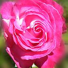 Garden Rose by Ann Persse