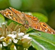 Orange Butterfly on Flower 1 by clearviewstock