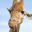 Put your tongue away... by clearviewstock