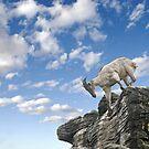 Rockclimbing Goat by clearviewstock