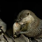Lunchtime - Oriental Small Clawed Otter by clearviewstock