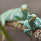 Iguana Love by clearviewstock