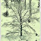 My trees by AlexThomson