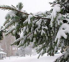 crossing the street on a blowy snowy day by dedmanshootn