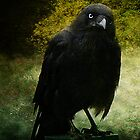 Aussie Crow by Chris Armytage