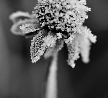 Winter Coat by RyanLeePhoto