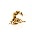 Northern Velvet Gecko (Oedura castelnaui) by Shannon Benson