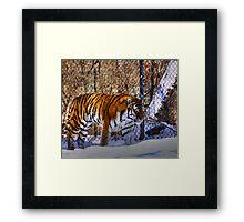 Tiger, Tiger in your tank? Framed Print