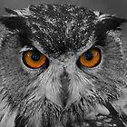 Eagle Owl by Richard Bowler