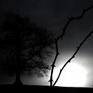 Winter Strikes by Jocelyn  Parry-Jones