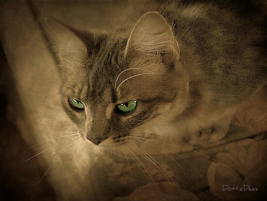 Cat Eyes by DottieDees