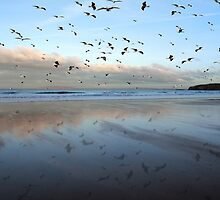Ballybunion seagulls over Ballybunion beach by morrbyte
