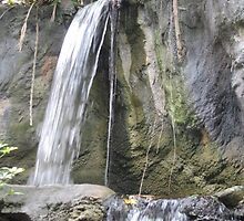 Waterfall at Busch Gardens, Tampa, FL by Debbie Robbins