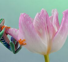 Pastel colours by AngiNelson
