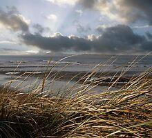 beale reeds on the west coast of Ireland by morrbyte