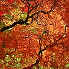 """""""Japanese Maples, George Eastman House"""" by Lisa Cook"""
