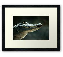 Caiman Framed Print
