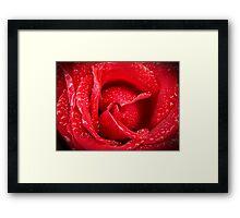 Rose After Rain Framed Print