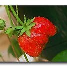 Strawberry by RosiLorz