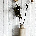 Dead Roses by friendlydragon