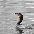 Cormorant by Richard Bowler