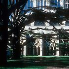 Salisbury Cathedral, through the cedars to the cloister by nealbarnett