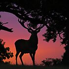 Red deer stag at dawn 2 by Richard Bowler
