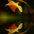 daffodill reflection by Rodney55