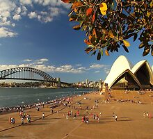 harbour bridge&opera house by matt ucar