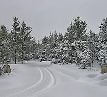 My Daughter's Snowy Driveway by Vickie Emms