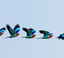 Dazzling flight by John Banks