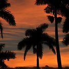 Royal Palm Sunset by David Lee Thompson