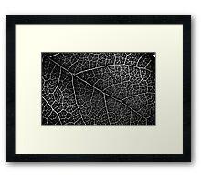 Leaf Projection Framed Print