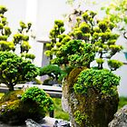 bonsai trees at the chinese garden by Leonardo Tarjadi