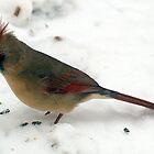 Female Northern Cardinal by BarbL